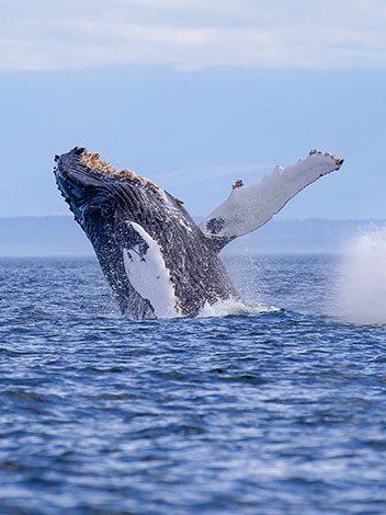 Monterey Whale Watching Package at Hotel California
